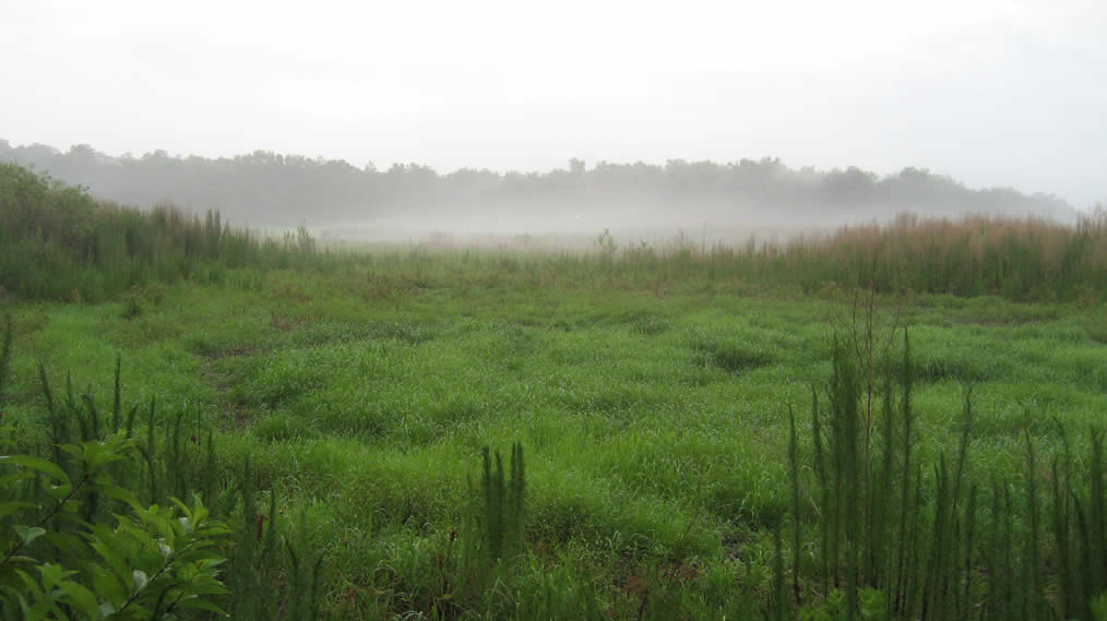 Early morning mist at Camp Wekiva